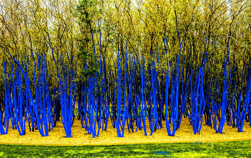 the-blue-trees-houston